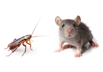 Eliminaci n cucarachas hormigas y roedores en madrid for Como eliminar plaga de hormigas